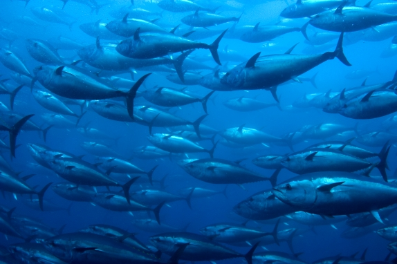 waste tracking wastetracking.com system bluefin tuna environmentalist food