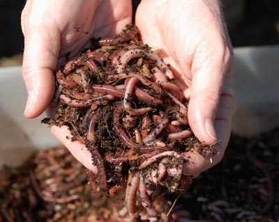 waste tracking wastetracking recycle gardening red wigglers worms to compost in an apartment