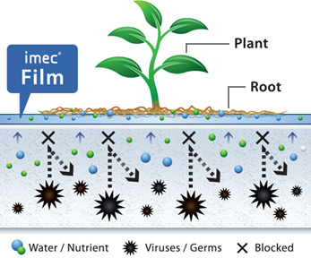 plant and vegtable imec system is a revolution that allows more food to be produced and hunger to be reduced