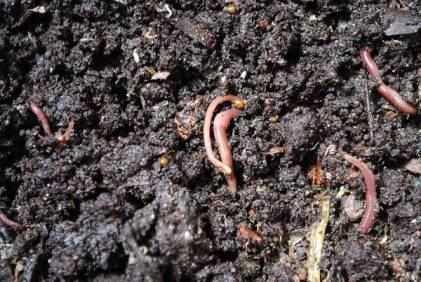 waste tracking wastetracking system vermicomposting worms in dirt with casings